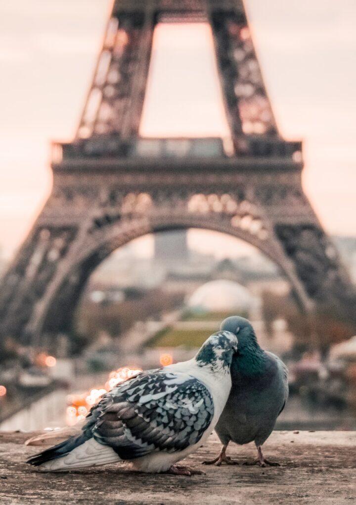 Πώς οι σπουδές μου στη Γαλλική Φιλολογία με έκαναν να αγαπήσω (και άλλο) τη λογοτεχνία και τη συγγραφή
