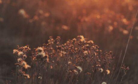 Τόνια Παναγοπούλου: Γράφοντας Μια Εκσυγχρονισμένη Οδύσσεια