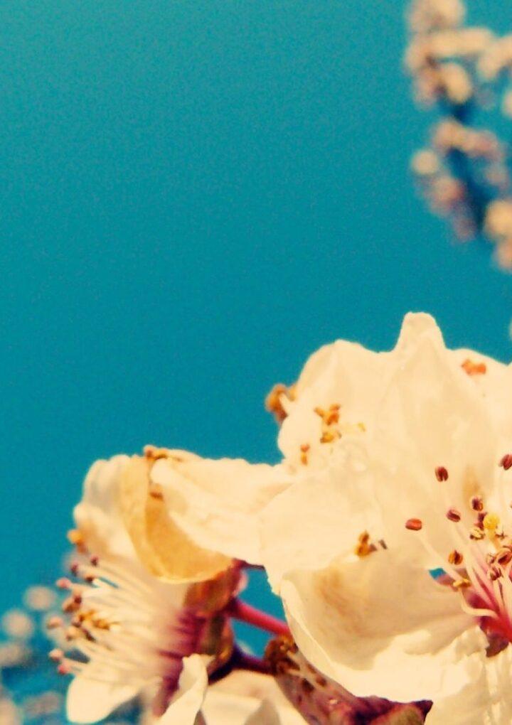 Spring Vibes   Playlist Μαρτίου